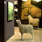 TVC: RBS Sheep